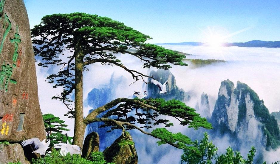 火车团-黄山-宏村-木坑竹海-西递-观黄山云海奇峰