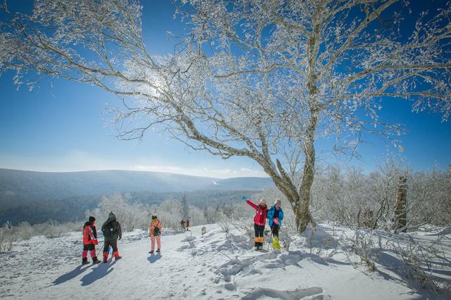 亚布力5S雪场激情滑雪,雪乡林海雪原徒步,镜泊湖冬捕,坐着马拉爬犁赏二浪河