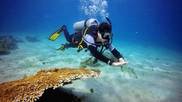 菲律宾薄荷岛进阶开放水域潜水员(AOW)课程,一张大海的通行证