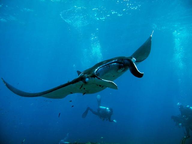 潜水体验券,体验潜水2小时,像鱼儿一样游走