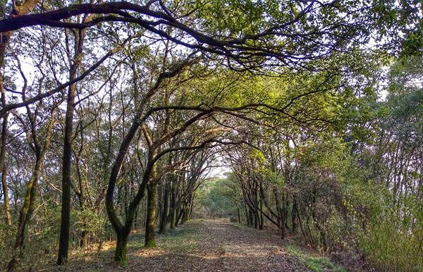 穿越无锡丘陵腹地 徒步军嶂古道丛林图片