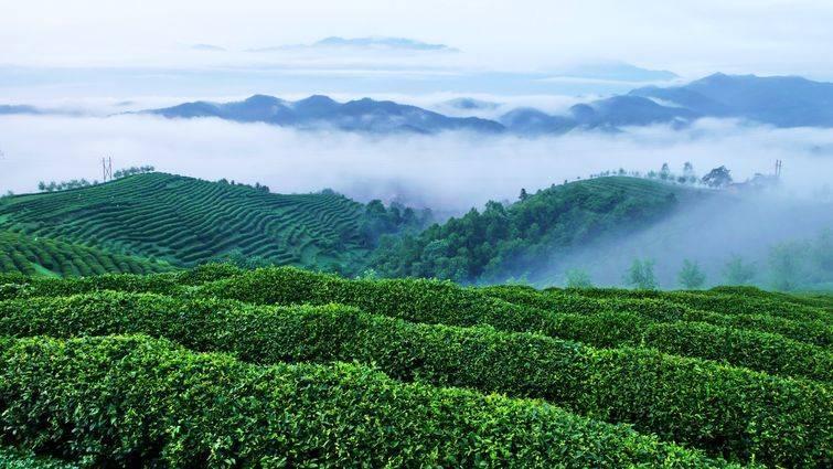 汉中西乡茶园+骆家坝古镇+午子山休闲两日游