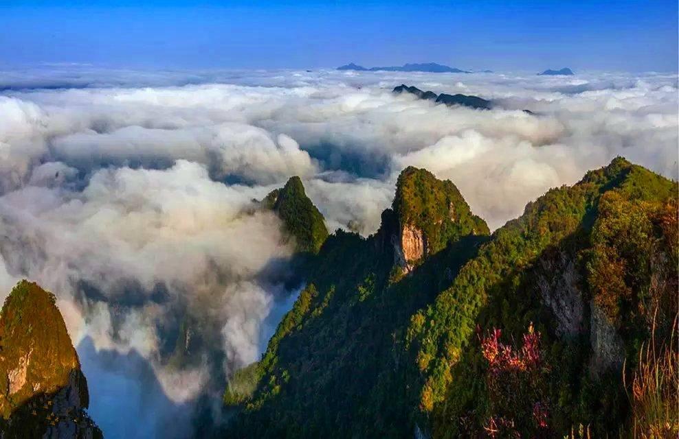八台山是四川省竹林面积最大的景区---毛竹林,也是八台山最吸引人的生景。山风吹拂,万顷竹海轻波悠悠,生机勃勃,令人流连忘返。在垭口以东,有一大片杜鹃花林,计有100多亩,3~4月份,杜鹃花盛开,粉红色的杜鹃花与竹海相映衬,形成万绿丛中一片红的迷人景象。境内有观云台、独秀峰、棋盘山、戈潭飞瀑、飞龙峡谷,万米漂流等大小景点百余个,若隐若现的佛光、日出、云海给八台山披上了一层神秘的面纱,无数座雄奇、险峻、陡峭的山峰象璀璨的宝石镶嵌在八百里秦川,正日益吸引着四面八方的宾客来此探险,观光旅游,享有川东小峨眉之