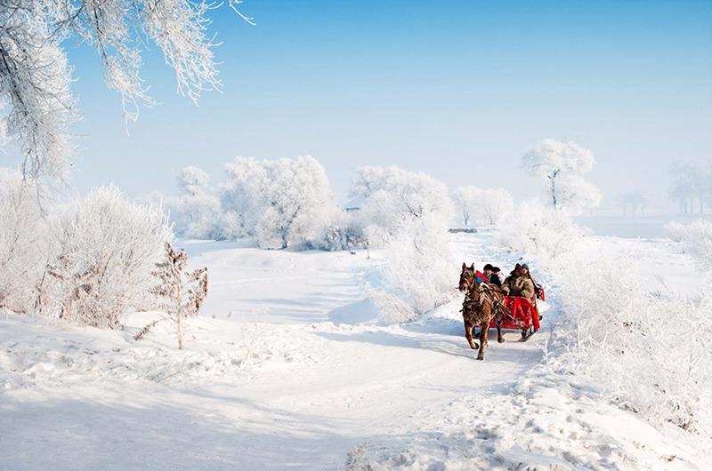 呼伦贝尔赏一望无际雪景 漠河寻觅北极之北