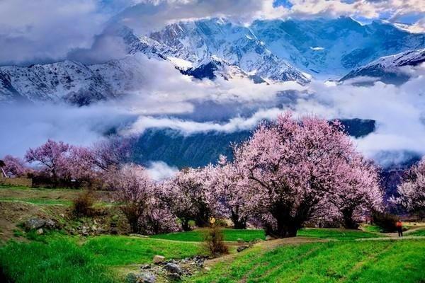 西藏最浪漫最美丽的春天-藏在桃花
