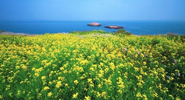 4月29日,璀璨星空、渔山花海,渔山列岛拥抱湛蓝大海