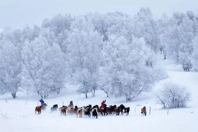 周五晚上【乌兰布统2日】印象:塞北雪乡,冰雪世界,万马奔腾,全程越野深度游 !
