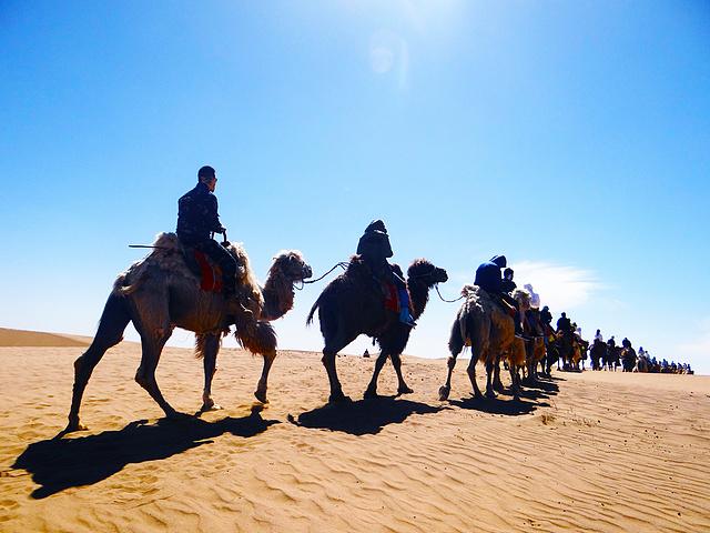 行走中的沙漠骆驼,两天一夜骆驼、沙漠露营
