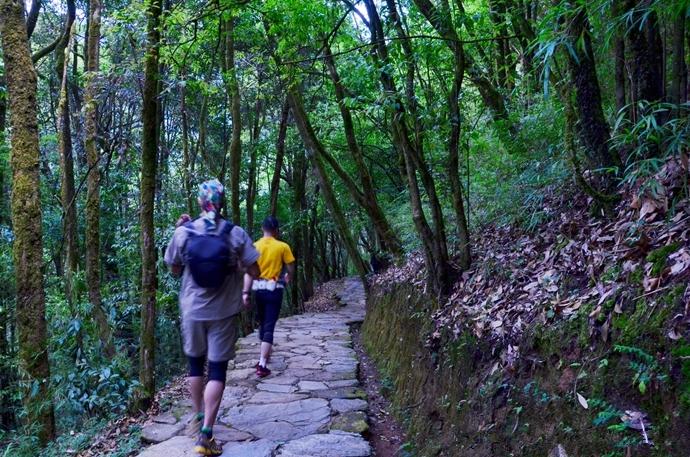 哀牢山原始森林徒步穿越,探寻茶马古道文化