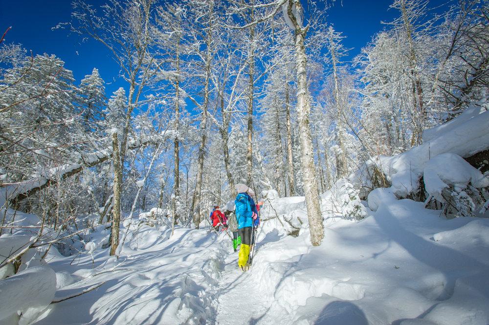 亚布力激情滑雪,徒步林海雪原,探访鄂温克驯鹿园,北极村找北