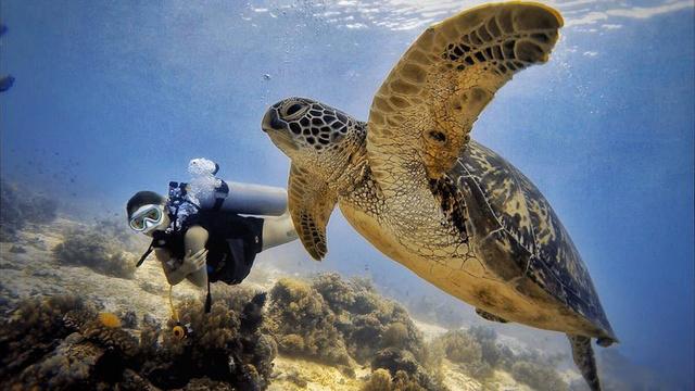 菲律宾海豚湾开放水域潜水员(OW)课程,一张大海的通行证