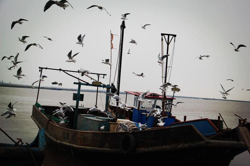 自驾召集令,海边打渔,参与渔民生活,品天下第一鲜