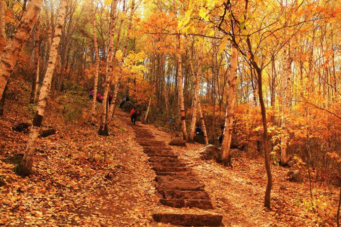 金秋赏红叶 喇叭沟门红叶行摄,白桦林间仰望秋风 休闲一日活动