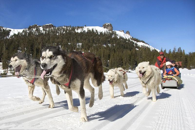 蒙古国惊险刺激狗拉雪橇探险之旅