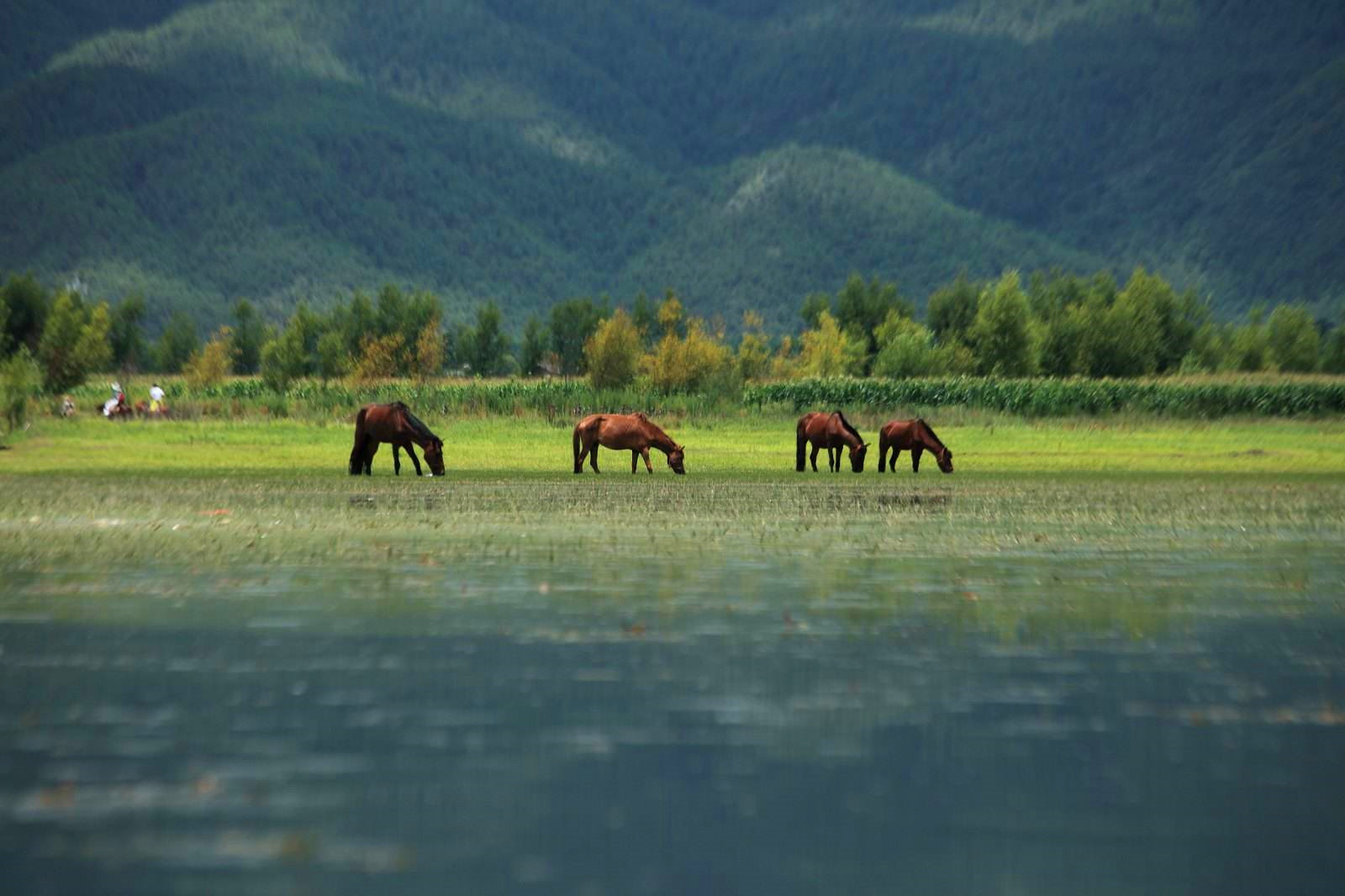 丽江白沙古镇骑沙滩车,拉市海骑马玩皮划艇看风景
