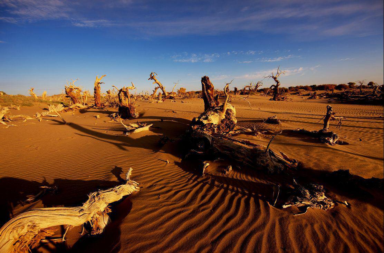 塞外戈壁,金色胡杨,西北环线摄影之旅