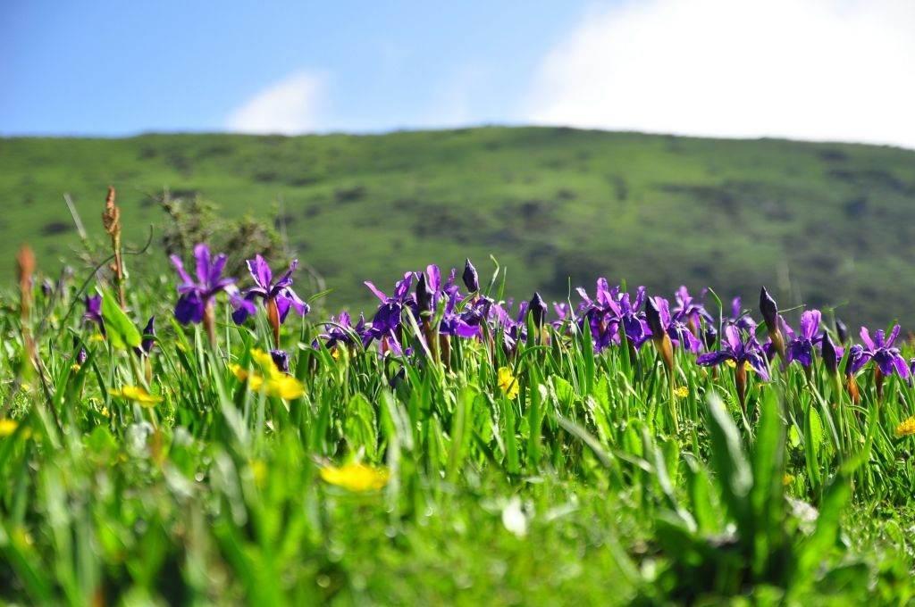 爱在山花烂漫时,九顶山花季有你更美