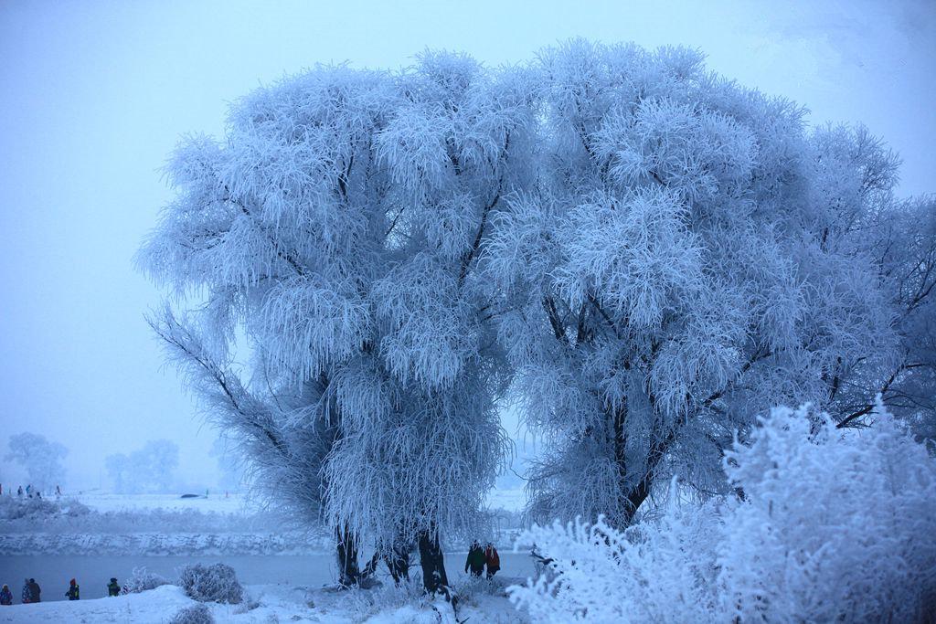 雾凇树上的冰糕+冻梨冻柿子+东北二人转+东北特色火炕