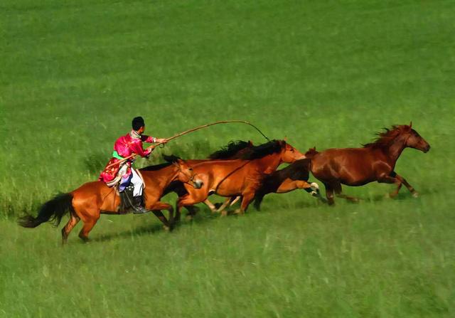 乌拉盖草原三日自驾游活动