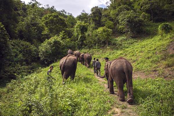 行摄西双版纳,热带雨林野象谷、傣族风情、民族美食的深度体验之旅