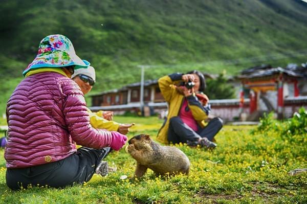 莫斯卡、党岭、色达、丹巴藏寨、中华大熊猫苑最自然原始风景环游