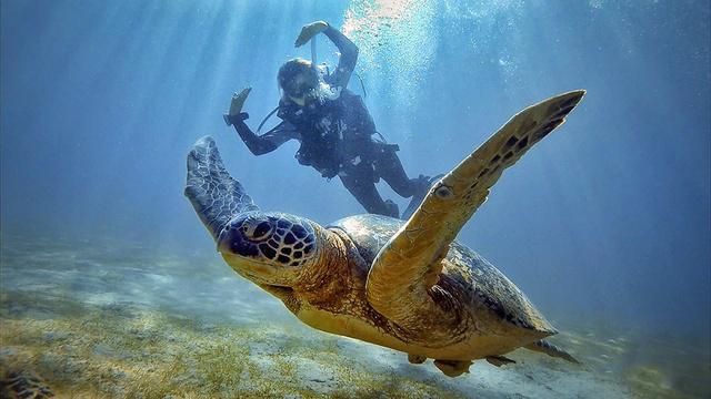 菲律宾海豚湾进阶开放水域潜水员(AOW)课程,一张大海的通行证