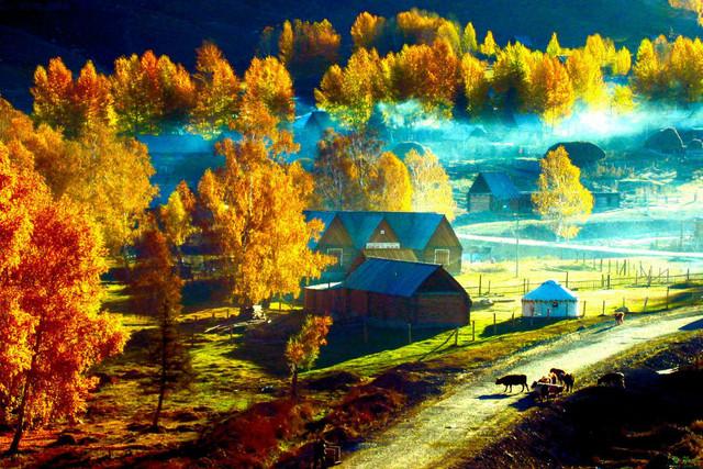 行摄金秋喀纳斯禾木布尔津,赏田园风光,记录靓丽美景