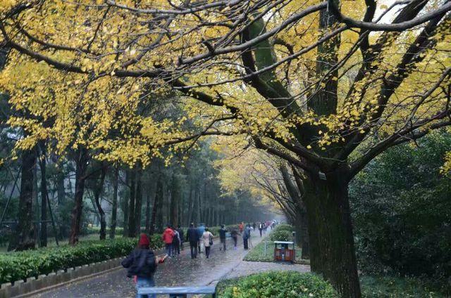 景区,去过3个就已难得  中山陵位于南京市玄武区紫金山南麓钟山风景区