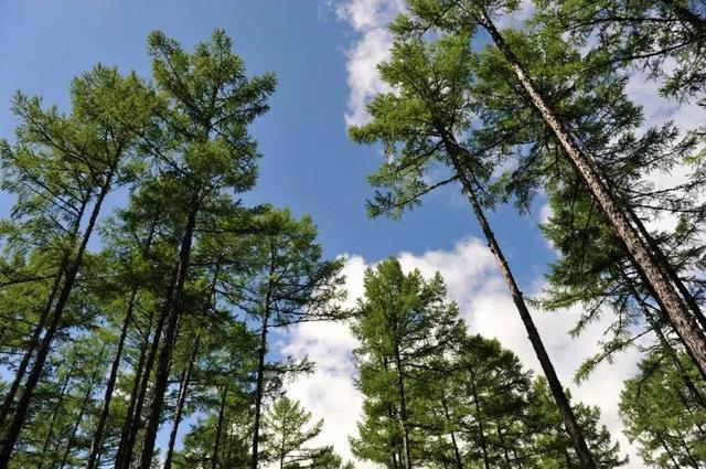 和平森林公园是个省级森林公园 ,地处大马群山之颠,距张家口市65公里