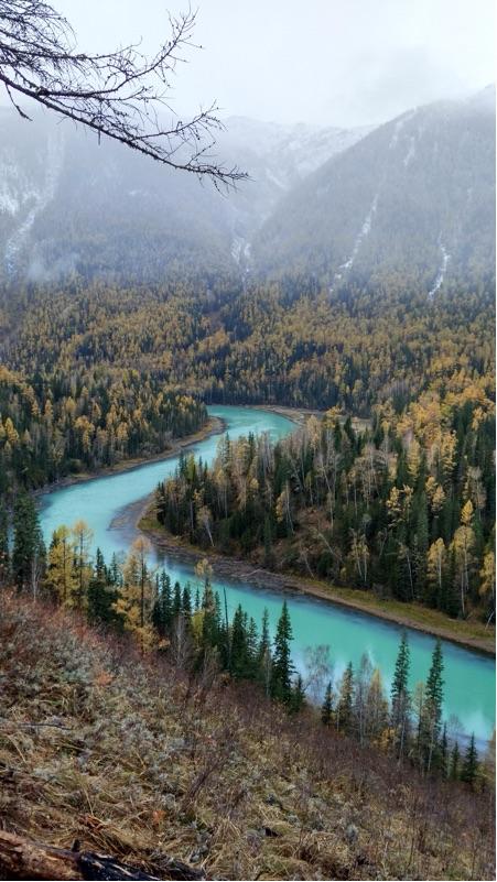 我想要深林风景图片