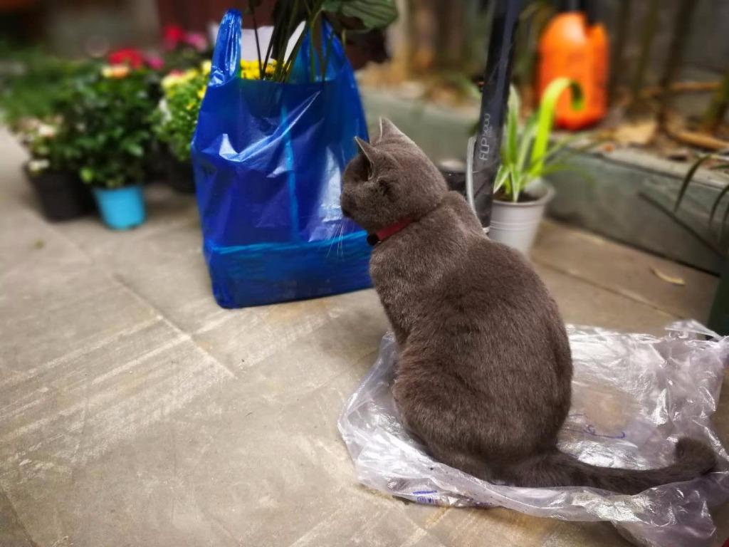 老板家的猫咪~胖胖的超级可爱.