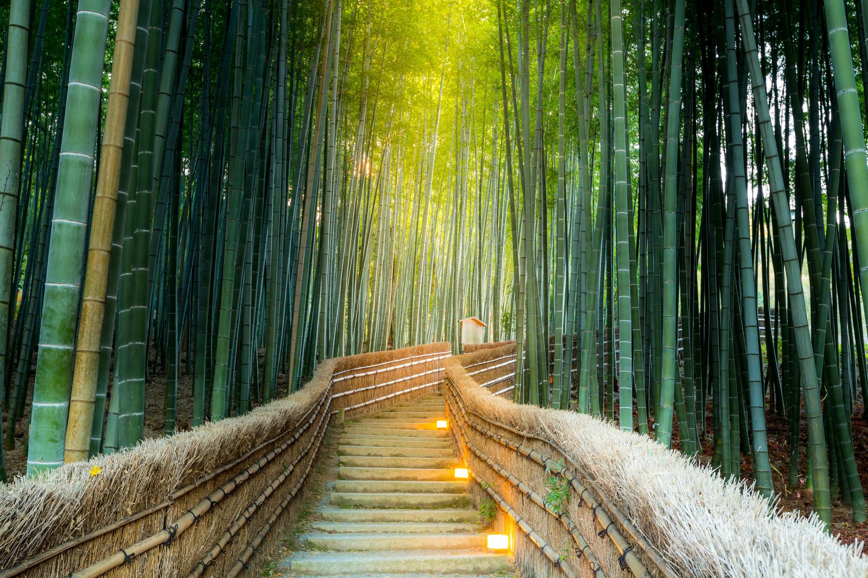 想翻山越岭去这些美丽的大森林打卡图片