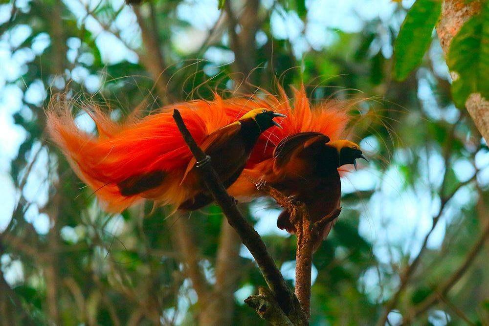 """滑翔伞到野生动物摄影,一个""""鸟人""""的事"""