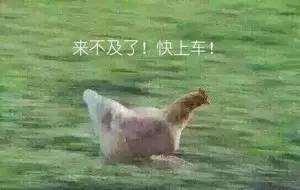 鸡年出行指南|来看看户外究竟有多少跟「鸡」有关的目的地!
