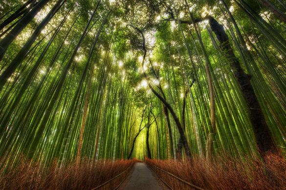 风景秀丽的佐加野竹林就坐落在这个国家级别的历史遗址兼风景区内