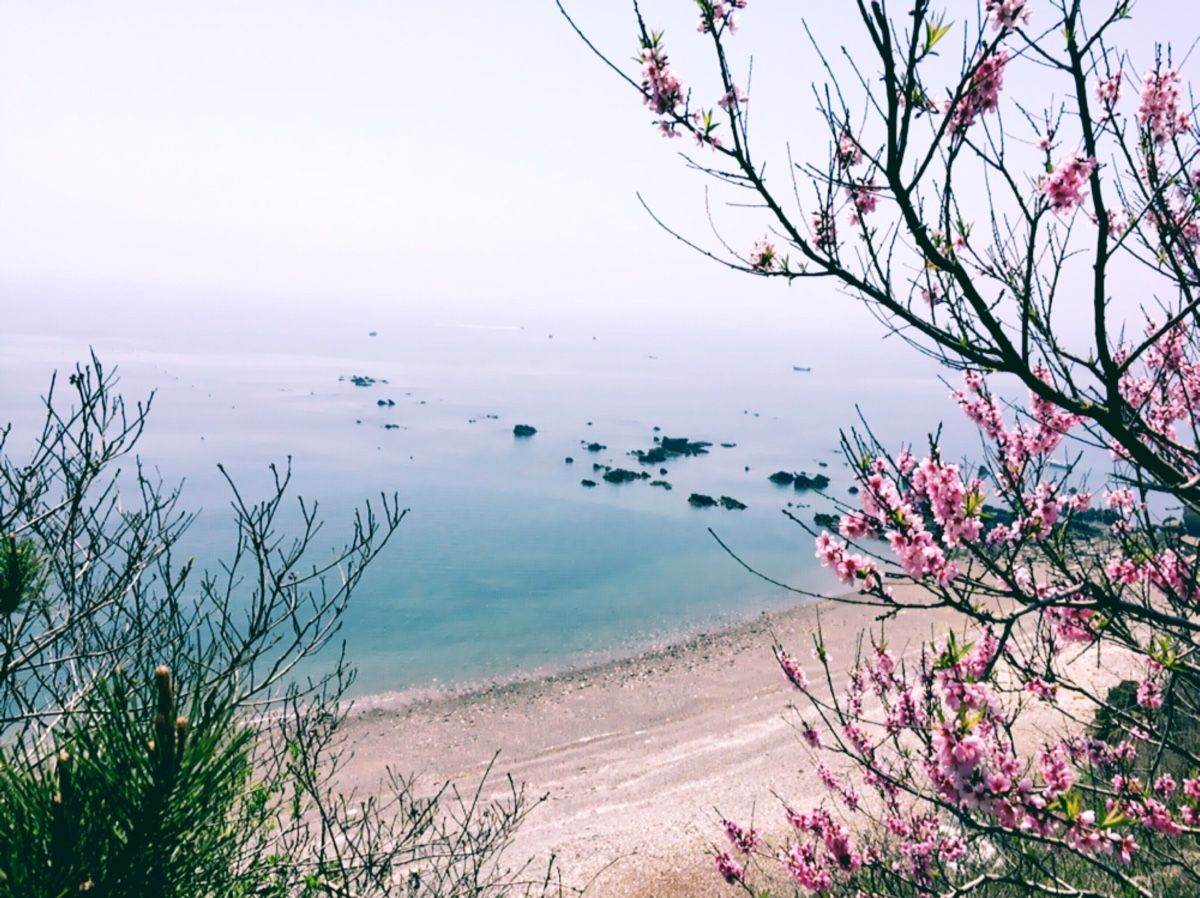 国内春日赏花地一览,让鲜花包围你~
