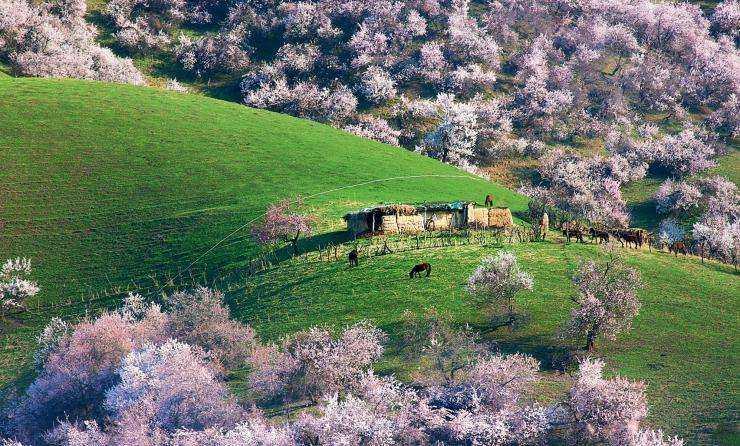 春日的新疆有最肆意的花海、最缤纷的春天、最少的游人...