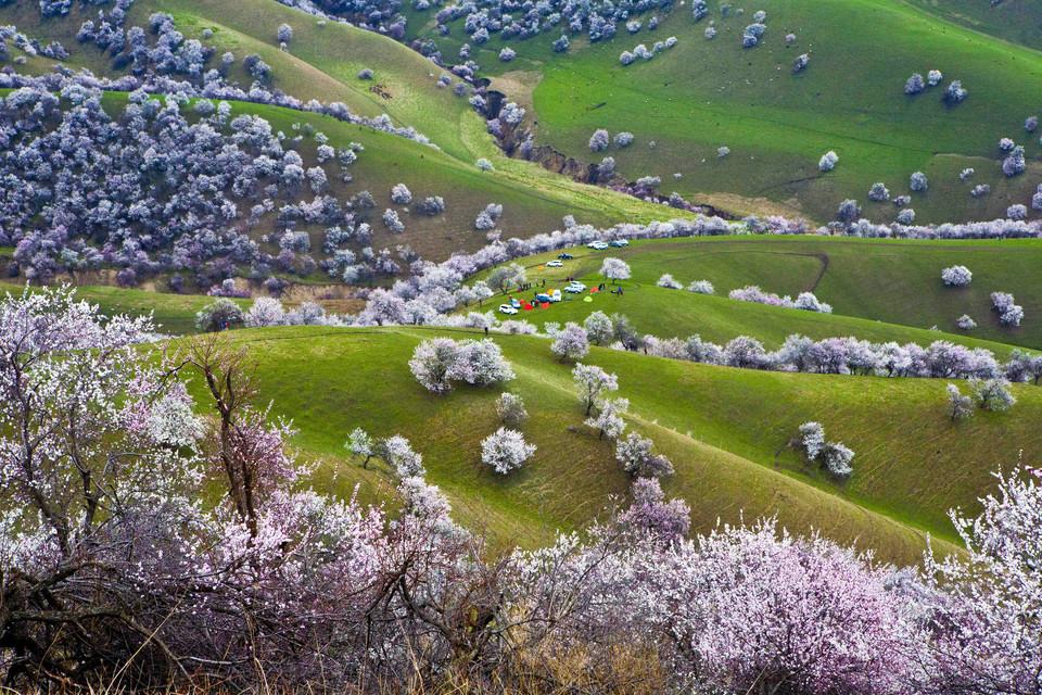 新疆伊犁杏花,吐尔根大西沟杏花库木塔格沙漠赛里木湖深度行摄