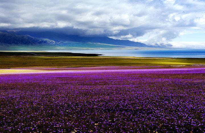 花海与冰川的梦幻组合,赛里木湖、夏特冰川、喀拉峻空中花海